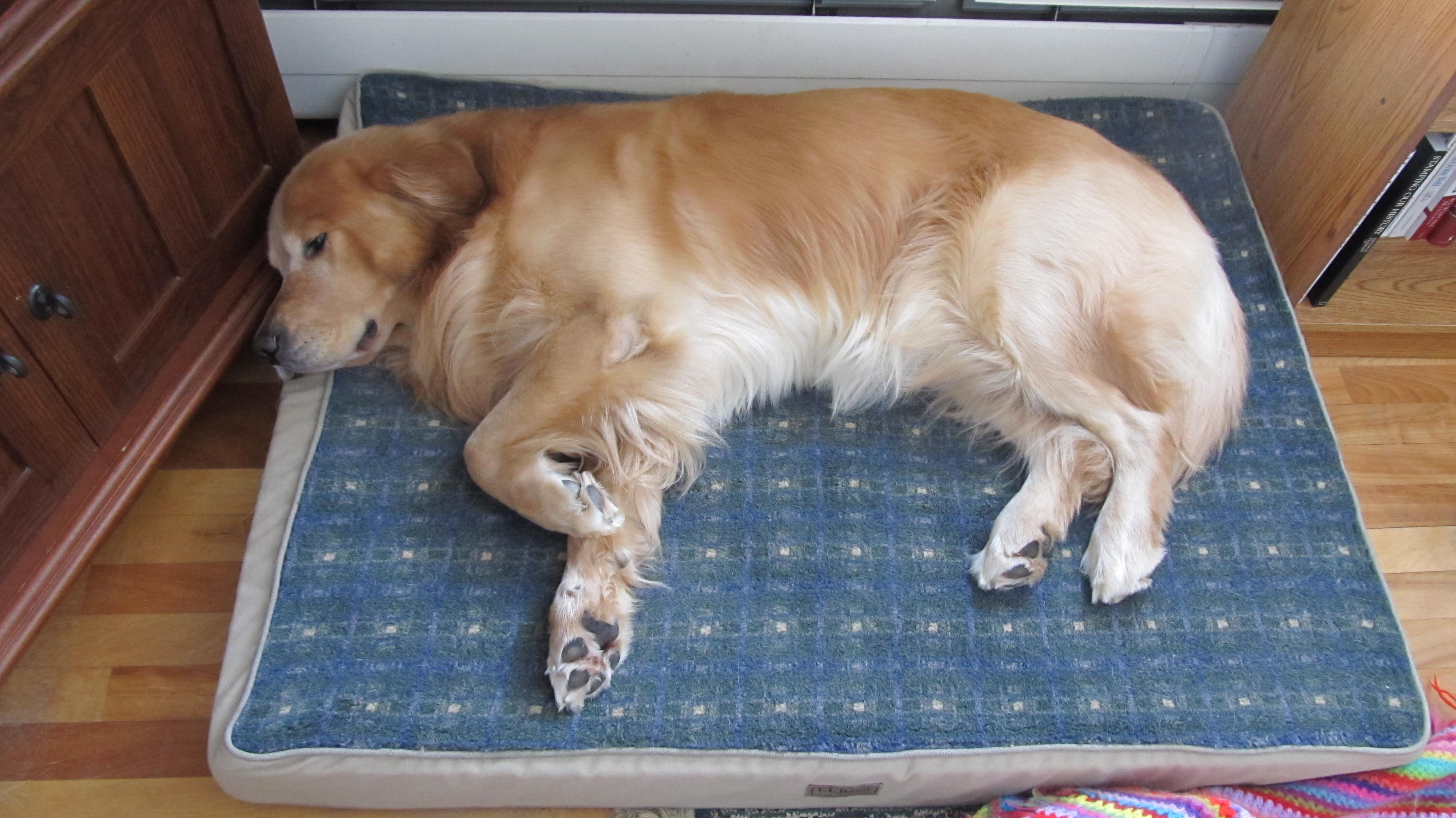 question about dog beds page 2 golden retrievers golden