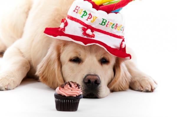 My Birthday Card From Our Greta Golden Retriever Dog Forums