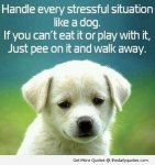 good-funny-dog-puppy-cute-life-quotes-sayings-picture-images.jpg