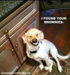 I-Found-Your-Brownies-Funny-Dog-Laughing.jpg