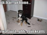 Funny Dog Pictures With Captions (49).jpg