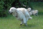 Tasha teaching puppies the zoomies.jpg