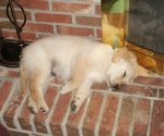sleepy fireplace pup.JPG