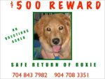 Roxie.$500 Reward.jpg