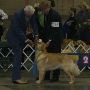 Jordan & Tucker win reserve winner from the puppy class in the ring