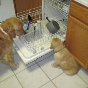 She must like him if she's sharing dishwasher time!