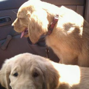 I misssss when they could BOTH fit in the front seat =(