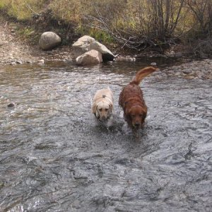 Out playing in the stream.