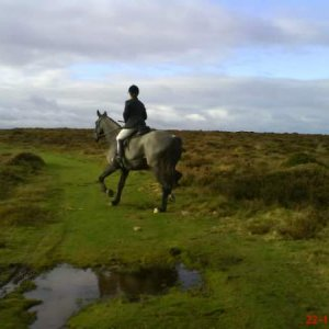 Quantocks horse & rider from Quantock staghounds