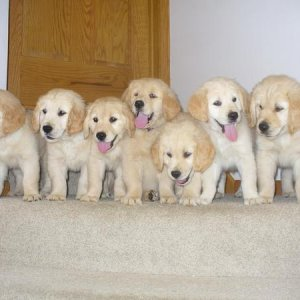 My puppies. There is one puppy missing from the picture. So just picture 8 puppies sitting on the top of the stairs.