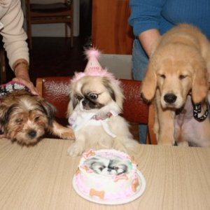 Eating cake with his buds