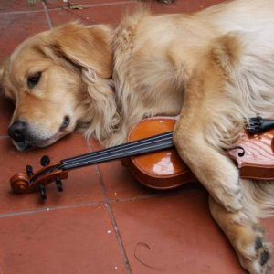 Relaxing during violin practice