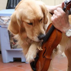 paw on violin