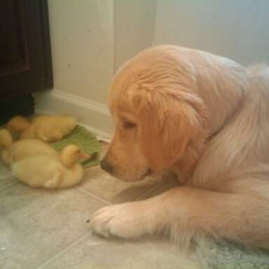 Phelps and his ducking friends.