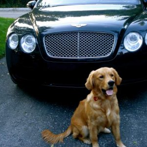 Bentley and a Bentley :)