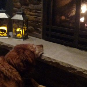 Sir Henry Enjoying The New Fireplace