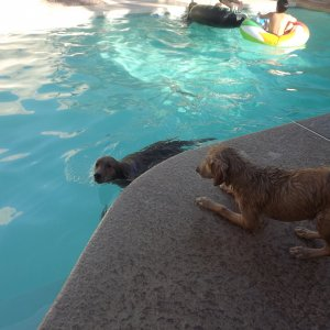 Bella And Lola Swimming