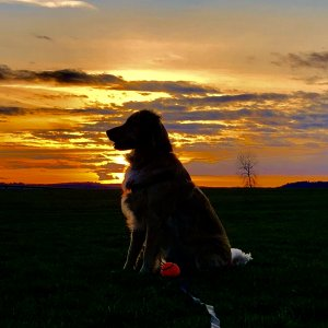 Daisy And Sunset