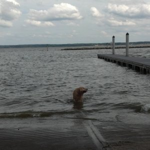Charlie Takes A Dip At The Boat Launch