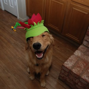 Silly Hat On Puppy