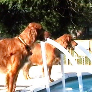 Cutter And Tibby By The Pool
