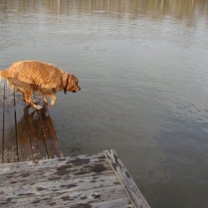 Miles' First Dock Dive