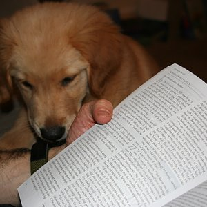 New Photo Of Pup Reading Daily Devotional