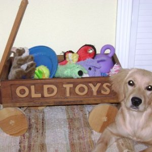 Layla's Toys