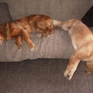 Kodiak & Pippin Sleeping On Sofa