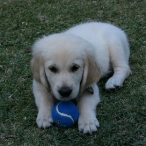 Booker T 9 Weeks With Ball